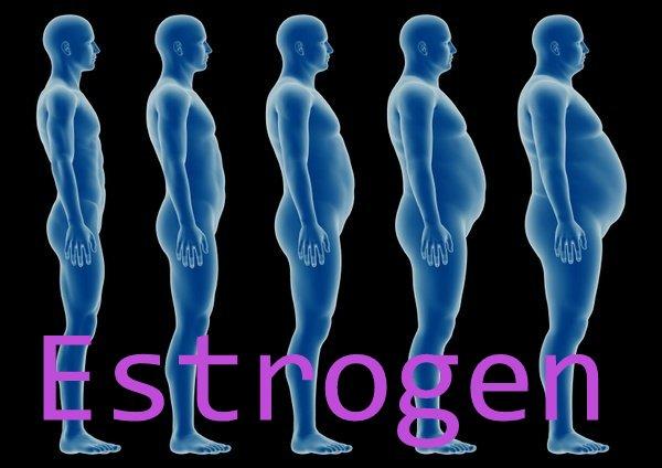 estrogen.jpeg (50.61 Kb)