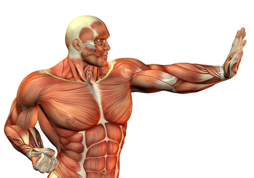 Найцікавіші факти про м'язи