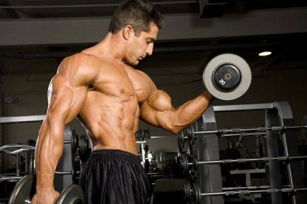 Адаптація м'язів до фізичних навантажень